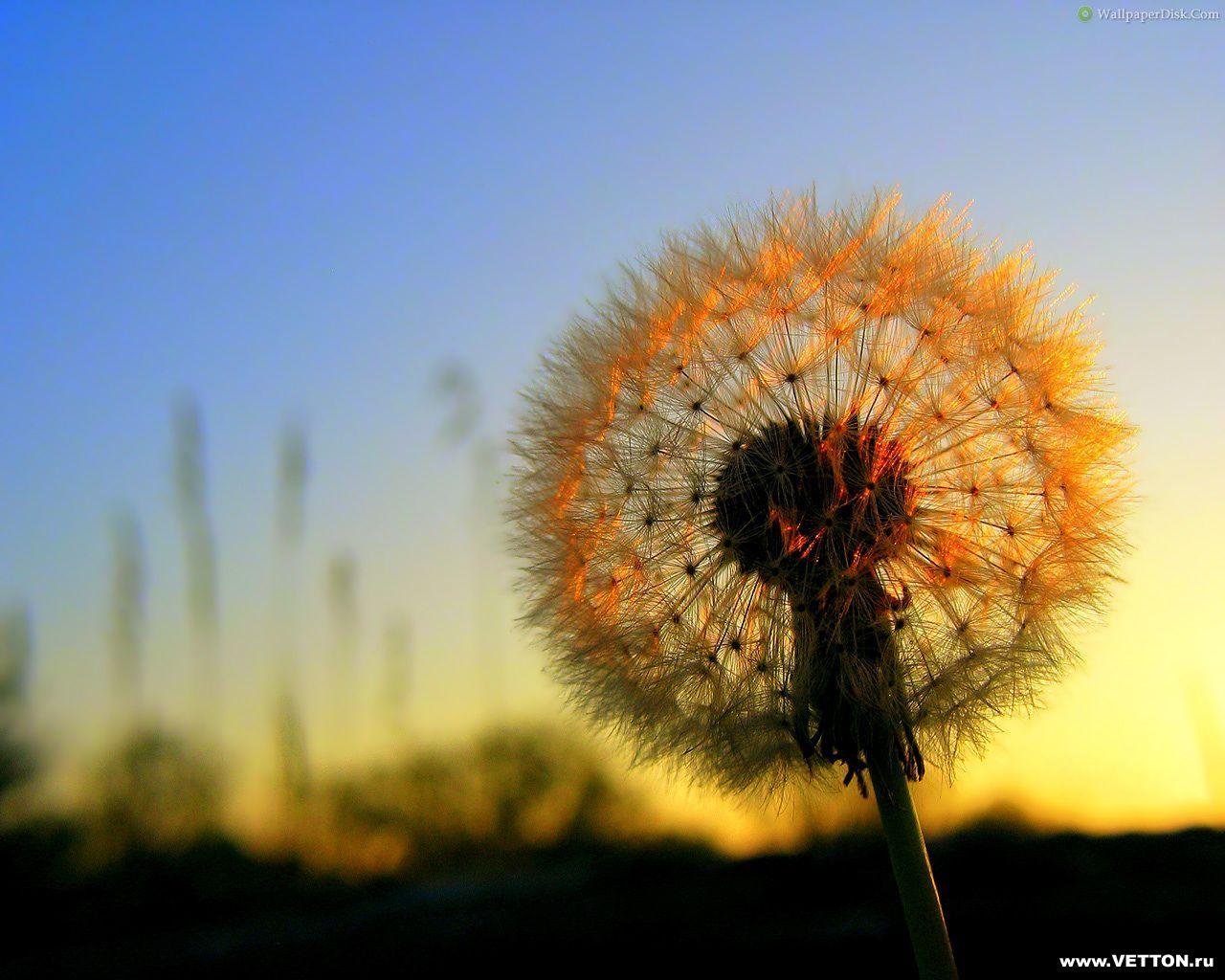 Beautiful Nature Part - 38: Beautiful Nature Desktop Wallpaper1